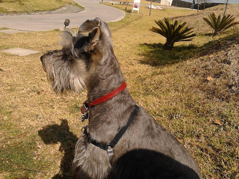 Check list Para un Buen Paseo con tu Perro