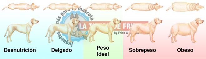 Determina el Estado Corporal de tu Perro Viendo las Siguientes Imágenes y Comparándolas con tu Perro