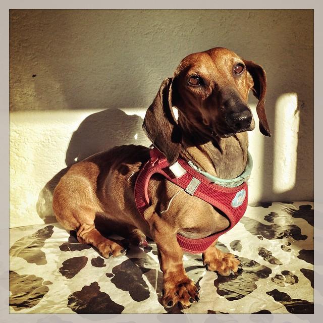 Elemental Mi Querido Watson... Es el Perro de la Semana #1 de La Tienda de Frida & Chelse
