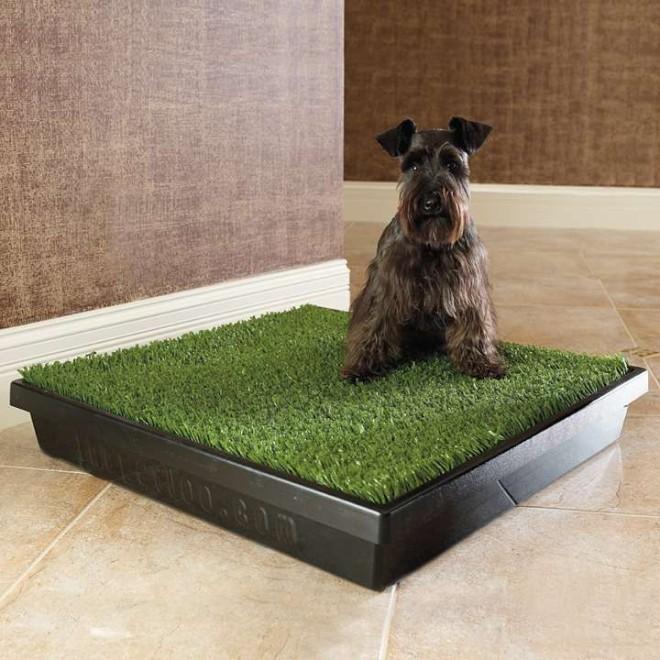 Scottish Terrier en su Baño Portátil para Interiores PetLoo