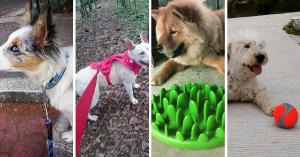 7 Hábitos que aprender de tu perro