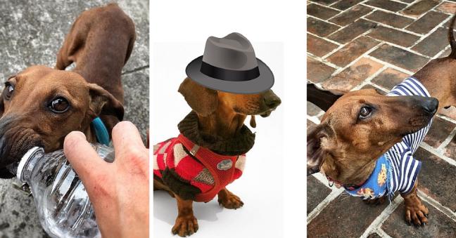Perro De La Semana #1 Elemental Mi Querido Watson