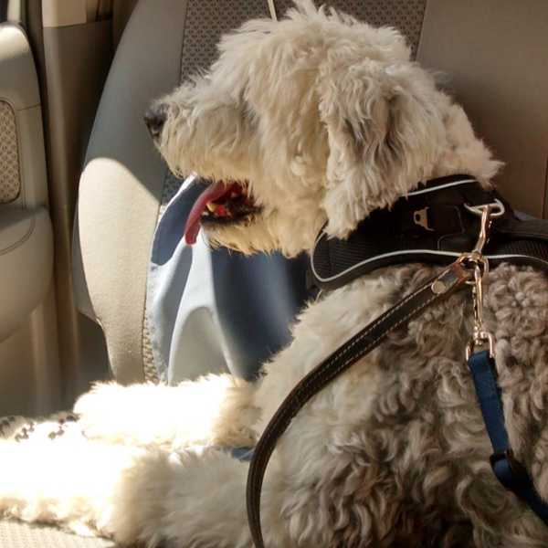 Harry de Paseo en el auto =)