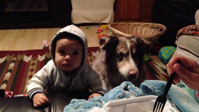 Perro dice Mama primero que el Bebe