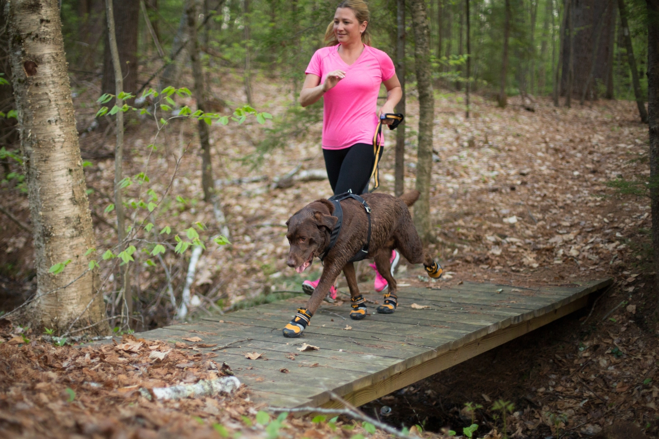 Corre 5K con tu Perro en 6 Semanas: Tips y plan de entrenamiento.