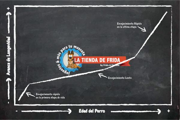 Pizarron-Sobre-Longevidad-de-perros